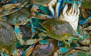 First Annual 30A Blue Crab Festival, Oct. 8