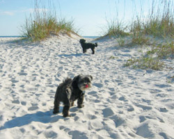 Pet Friendly Destin Rentals